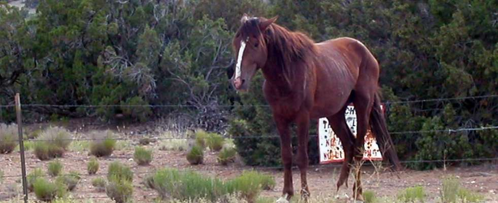 Horse suffering from Small Strongyles
