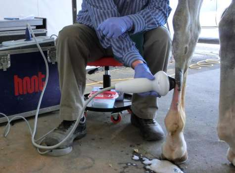 Equine Shock Wave Therapy