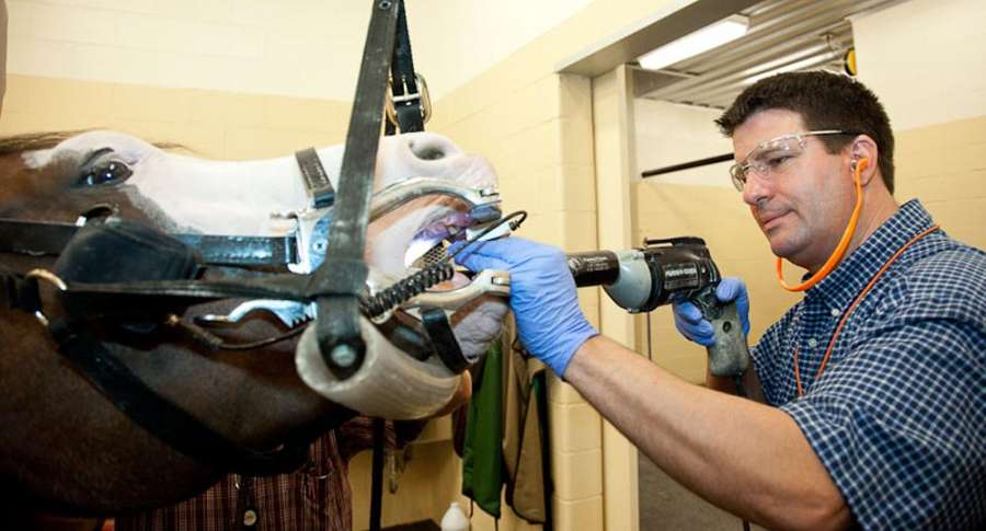 Dr. Mark Meddleton performs Equine Dentristy