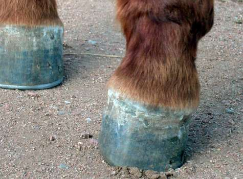 Diseases of the hoof