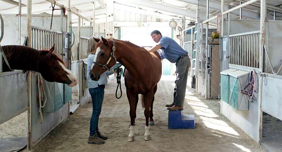 Equine Chiropractic Care